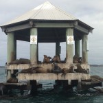 Seals at Chinaman's Hat